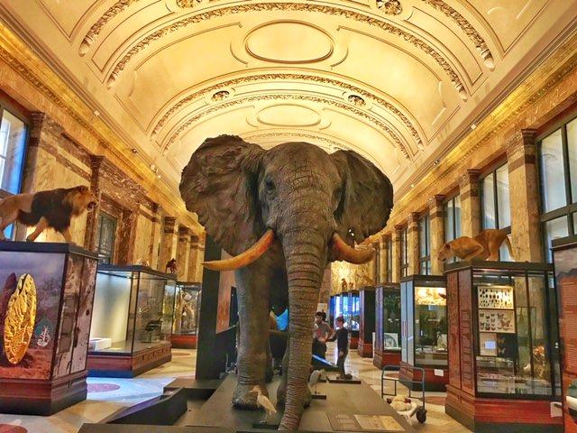 Museo.Museo Real De Africa Central La Busqueda De Reconciliacion Con El