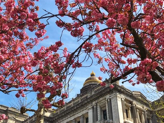 10 cosas que ver y hacer en Bruselas en primavera