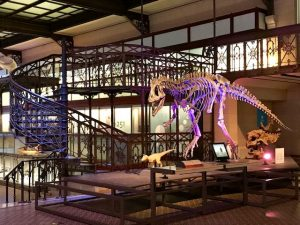 15 planes para disfrutar de Bruselas en familia dinosaurio