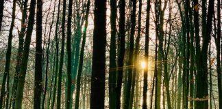 Agenda febrero Bosque de Soignes