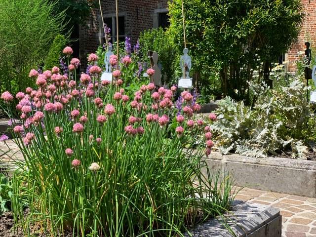 Casa Erasmo jardin medicinal planta